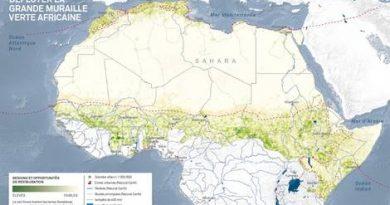 Muraille Verte : 2 millions d'acacias plantés en 3 ans au Tchad