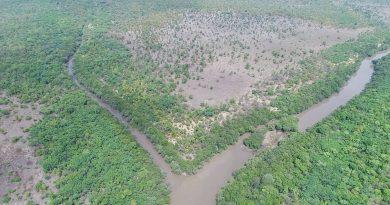 Vue aérienne de la forêt de Bougouni. Crédit Photo: Mali-Folkecenter Nyetaa