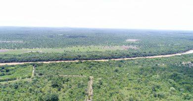 La déforestation continue mais à un rythme plus faible