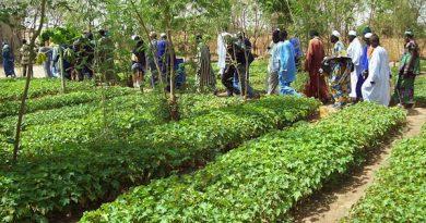 Afrique de l'Ouest : une politique d'agroforesterie nationale ciblée inexistante !