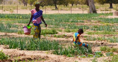 Femme Rurale Mali