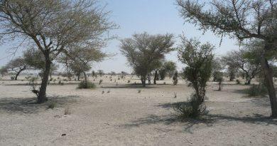 Arbres Sahara Sahel