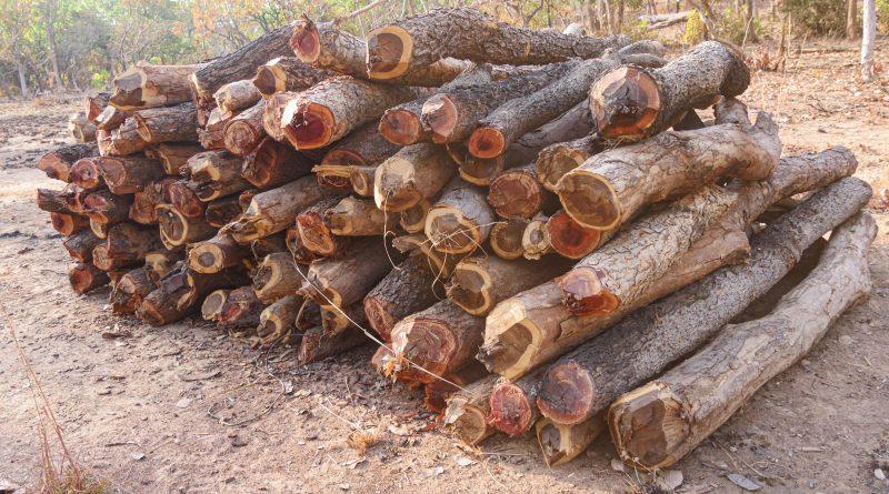 Tas de bois dans la zone de Bougouni